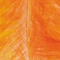 Marabufedern Orange, 2g