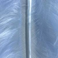 Marabufedern 80-100 mm Hellblau ~ 22 Stück