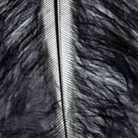 Marabufedern schwarz, 2g