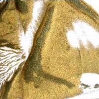 Encaustic Wachsfarbe in Blöckchenform, Farbe Gold. Metallisch schimmerndes Encaustic Wachs für Encaustic Painting.