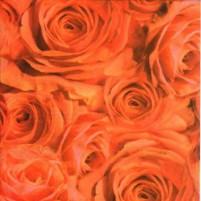 Transparentpapier Rosen Apricot, DIN A4, 3 Stk,