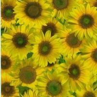 "Transparentpapier ""Sonnenblumen"" DIN A4, 3 Stk,"